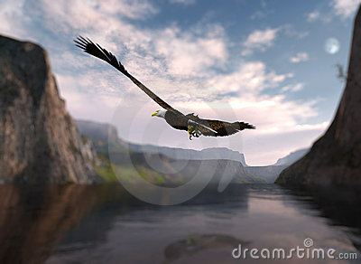Eagle soaring over water.