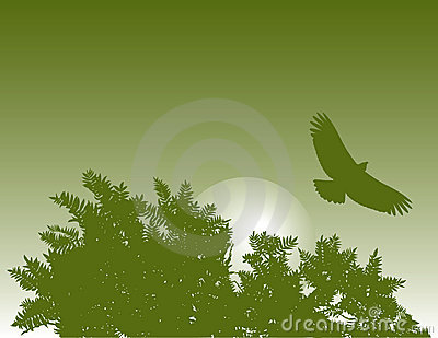 Eagle and tree