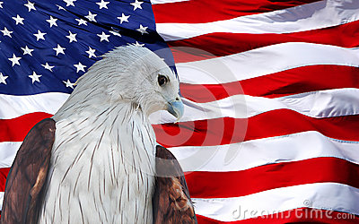 Eagle VERMELHO ajustado contra a bandeira americana.