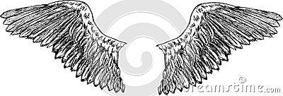 Eagle wings vector