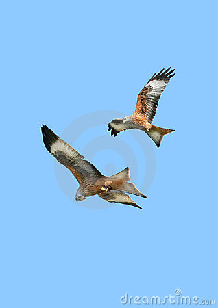 Free Eagles In Flight Royalty Free Stock Images - 5632809