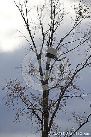 Free Eagles Nesting Stock Photos - 27675153