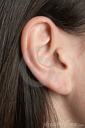Free Ear Royalty Free Stock Photo - 18388195