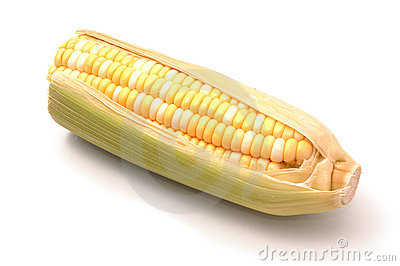 Ear of Corn Over White