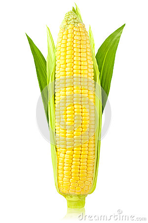 Free Ear Of Corn / Vertical / Isolated Stock Photography - 25801772