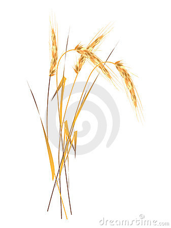 Free Ear Of The Wheat Stock Photo - 3035200