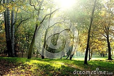 Early autumn park