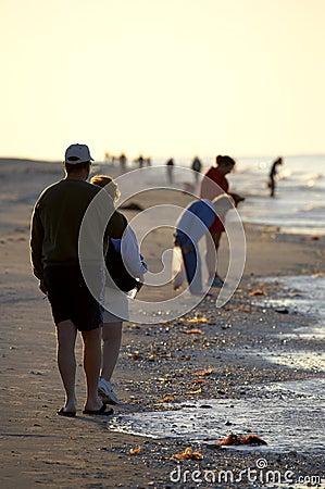 Free Early Morning Avid Shell Hunters Royalty Free Stock Photography - 681897