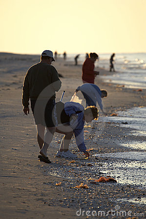 Free Early Morning Avid Shell Hunters Stock Photography - 681902