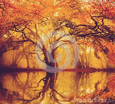 Free Early Morning Misty Fall Forest Royalty Free Stock Photography - 115210537