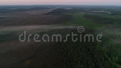 Morning view the forest and fields stock video