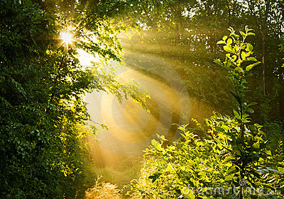 Early Morning Sun In Forest Stock Photography Image