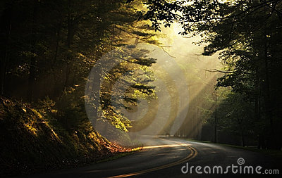 Early Morning Sunbeams in the Woods