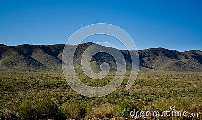 Early spring in desert 2