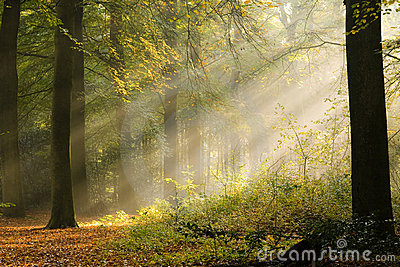 Early sunbeams in the woods