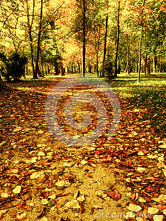 Free Early Winter Park Path Royalty Free Stock Image - 27865326