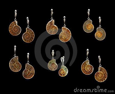 Earrings with ammonites