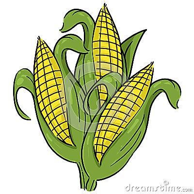 Ears of corn illustration
