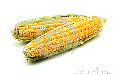 Ears of maize