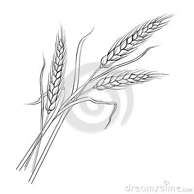Free Ears Of Wheat. Royalty Free Stock Photos - 31749238