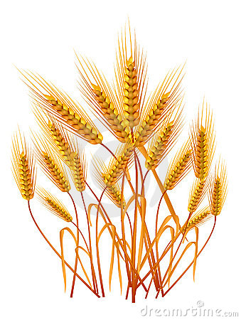 Free Ears Of Wheat Royalty Free Stock Photography - 4903267