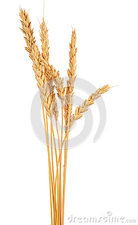 Free Ears Of Wheat Stock Images - 82317634