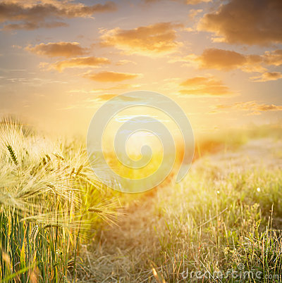 Free Ears Of Wheat At Sunset Against  Beautiful Sky , Nature Background Stock Image - 51489601