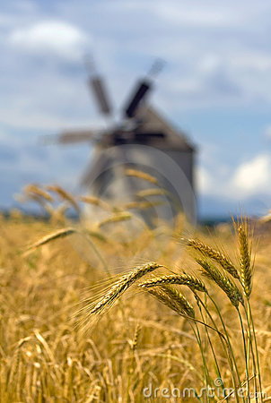 Ears of wheat and windmill