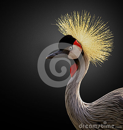 Free East African Crane Royalty Free Stock Photography - 35143377