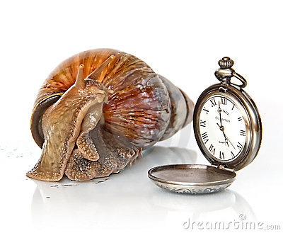 East African snail and clock