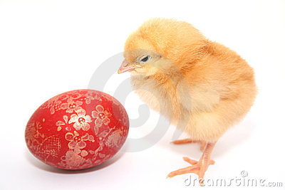 Easter chicken and egg