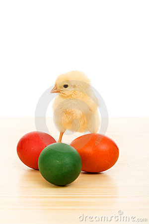 Easter baby chicken with colorful eggs