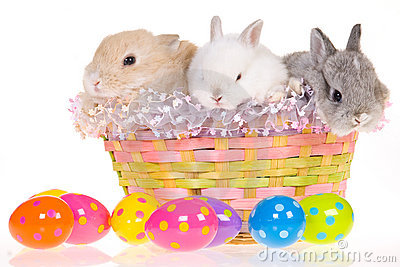 Easter bunnies in basket with eggs