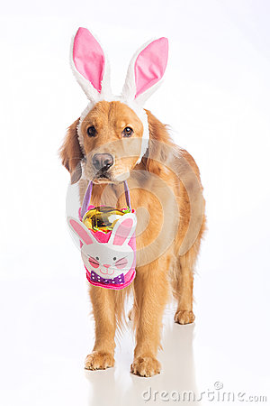 Free Easter Bunny Dog With Basket And Golden Egg Stock Images - 50364194