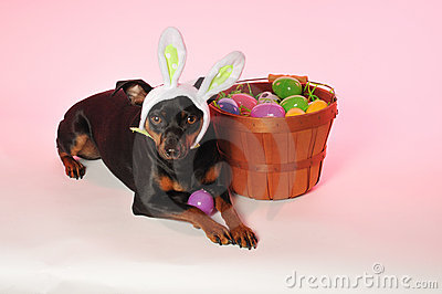Easter Bunny Doggie