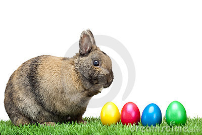 Easter bunny in meadow with colorful Easter eggs