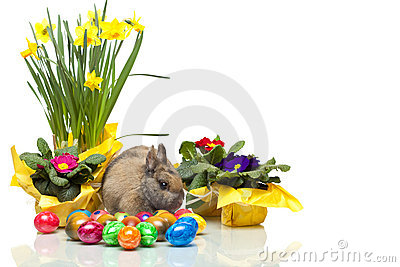 Easter bunny near daffodil, primrose and eggs