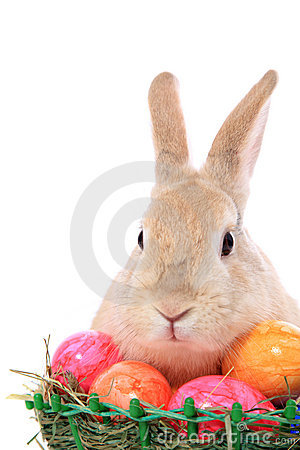 Free Easter Bunny With Easter Eggs Stock Photography - 19922422