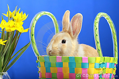 Easter bunny and yellow tulips