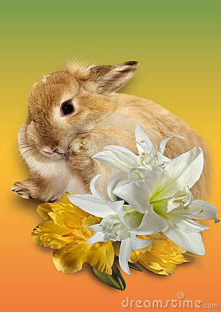 Free Easter Card Stock Photos - 8450323