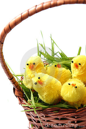 Free Easter Chicken Royalty Free Stock Photo - 2032695