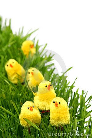 Free Easter Chicken Stock Photos - 2032873