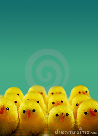 Free Easter Chicks Royalty Free Stock Photos - 2123788