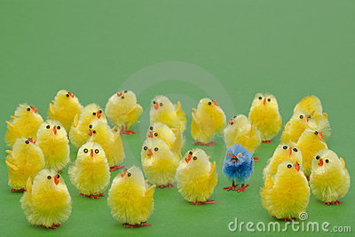 Easter chicks the odd one out