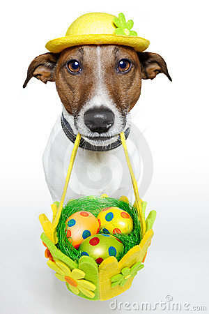 Free Easter Dog Stock Photography - 23668472