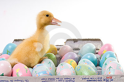 Easter Duck With Confetti Eggs