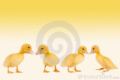Easter ducklings border