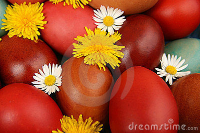 Easter Eggs With Camomile And Dandelion