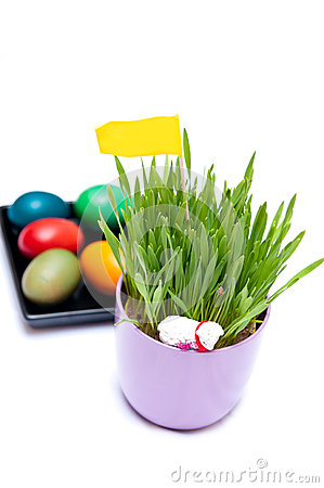 Easter Eggs and Green Plant