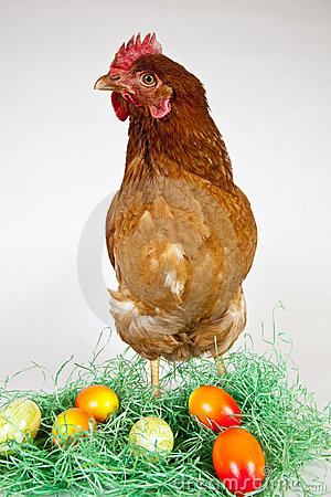 Easter Eggs with a Hen